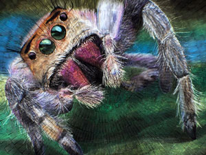Female jumping spider chalk art