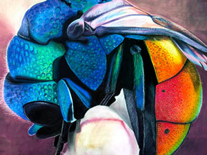 Sleeping cuckoo wasp chalk art